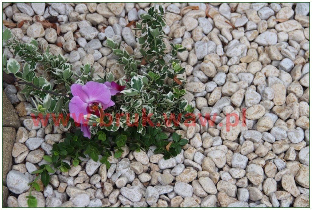 kamienie-w-ogrodzie_22