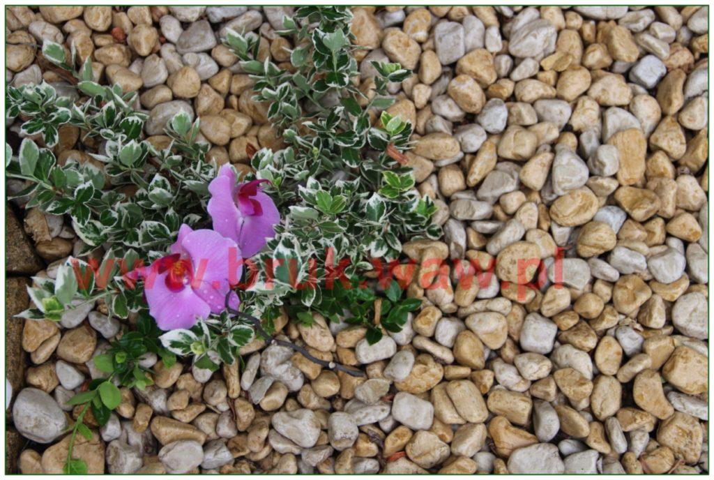 kamienie-w-ogrodzie_25