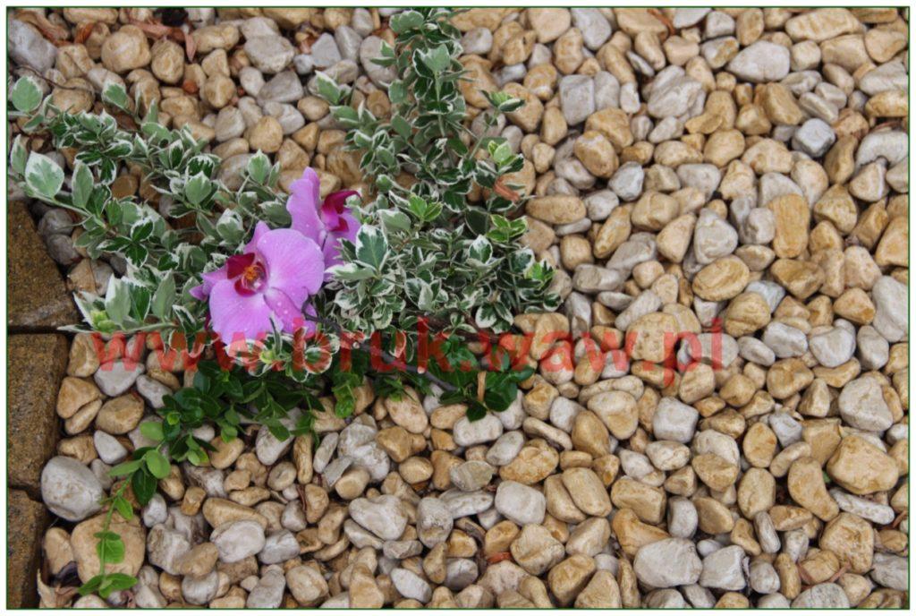 kamienie-w-ogrodzie_28